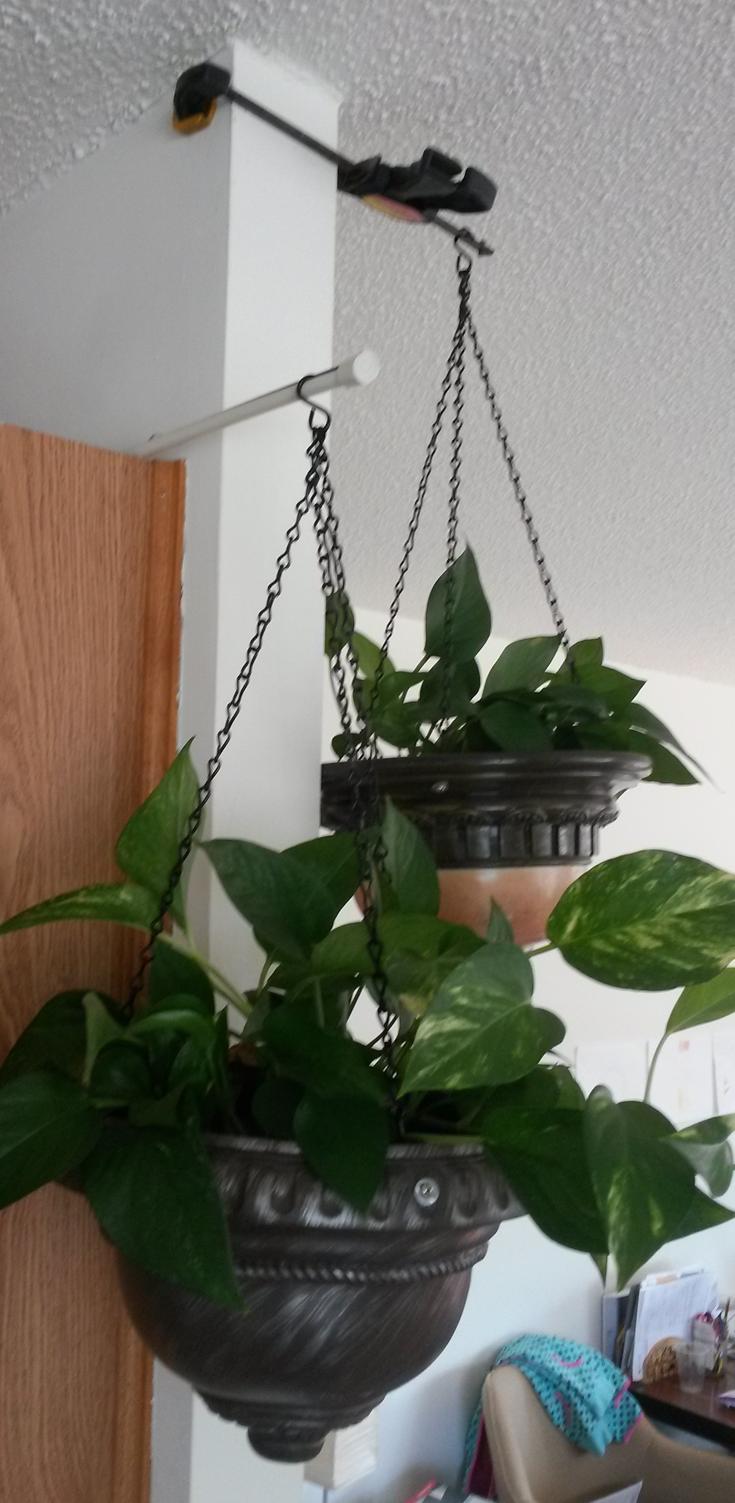 Hanging Plants Hook